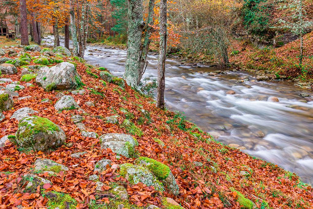 Un bosque caducifolio que merece una visita. Foto: Shutterstock