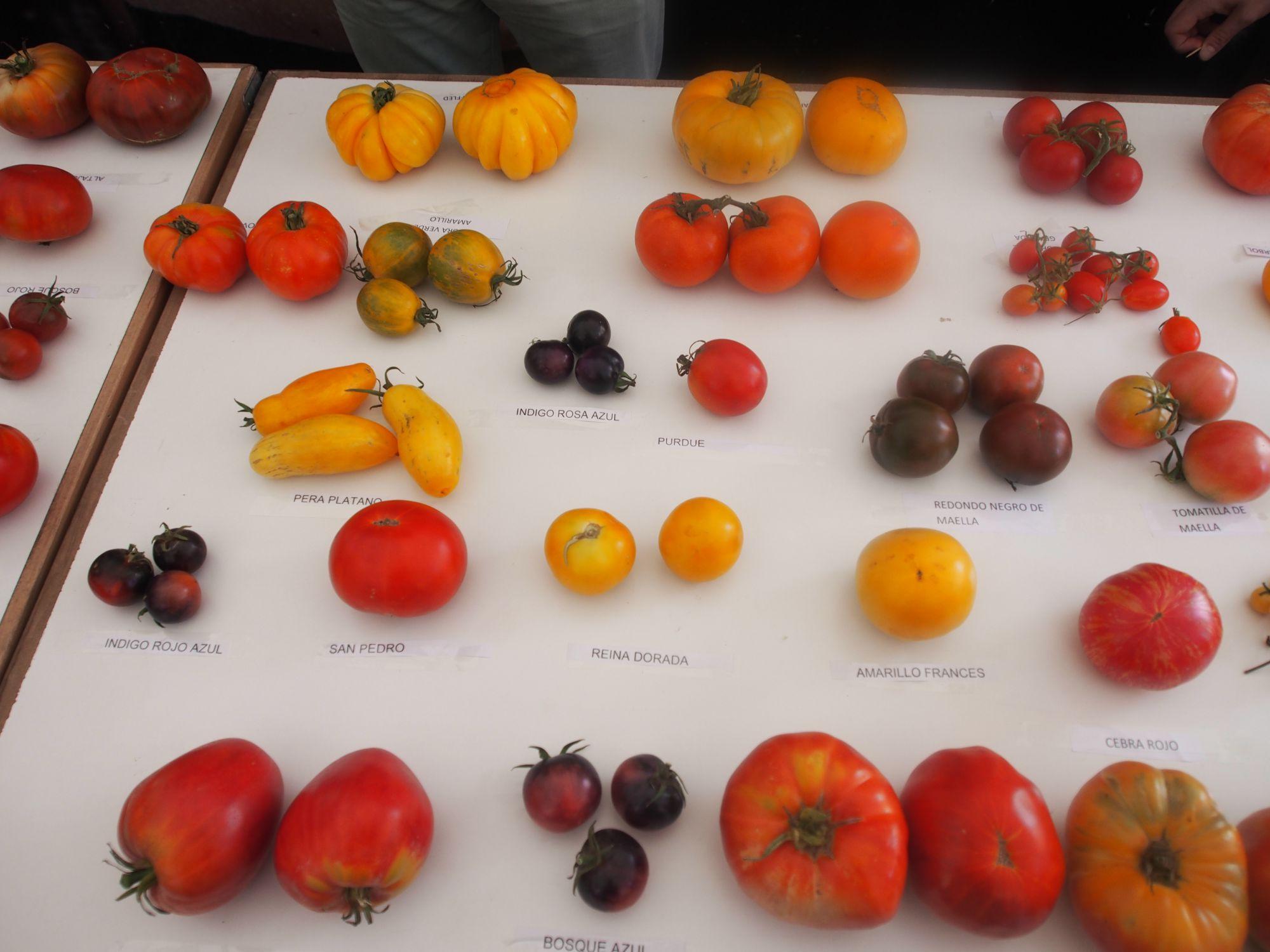 Colección de tomates de Carlos Gil