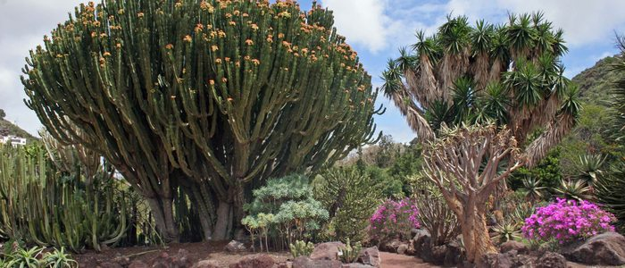 Jardín Botánico Viera y Clavijo. Foto: Manuel Quevedo.