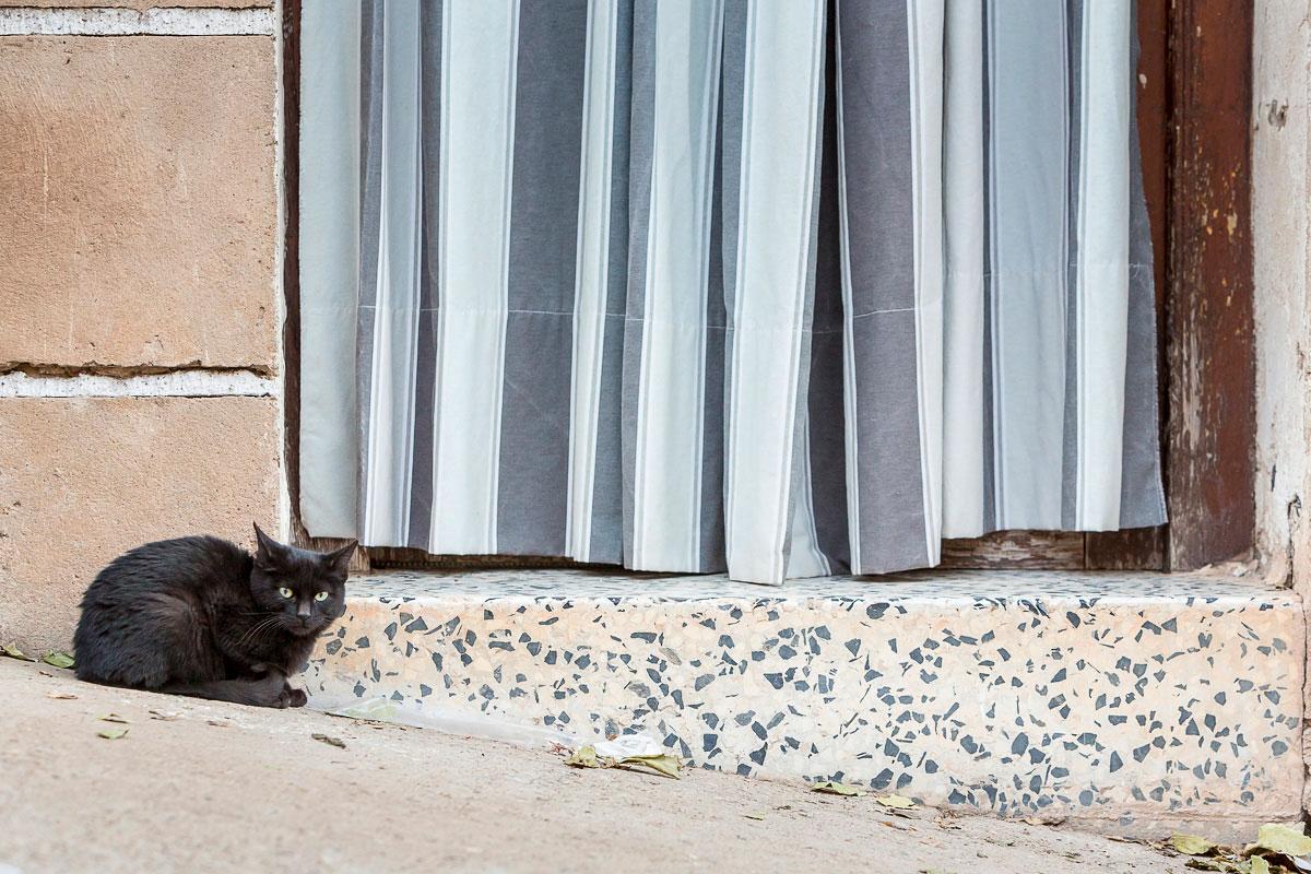 Trasmoz: Gato negro en una puerta del pueblo. Foto: Ferrán Mallol