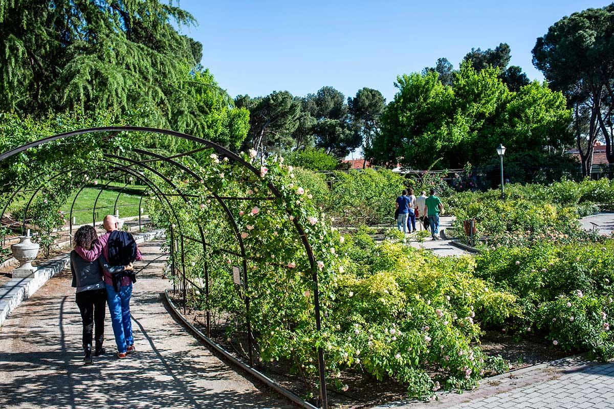 Una pareja pasea bajo las pérgolas cubiertas de rosales de La Rosaleda del Parque del Oeste, Madrid.