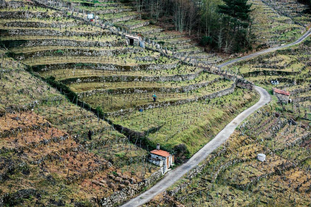 Vides en el valle de 'Finca Rosende'.