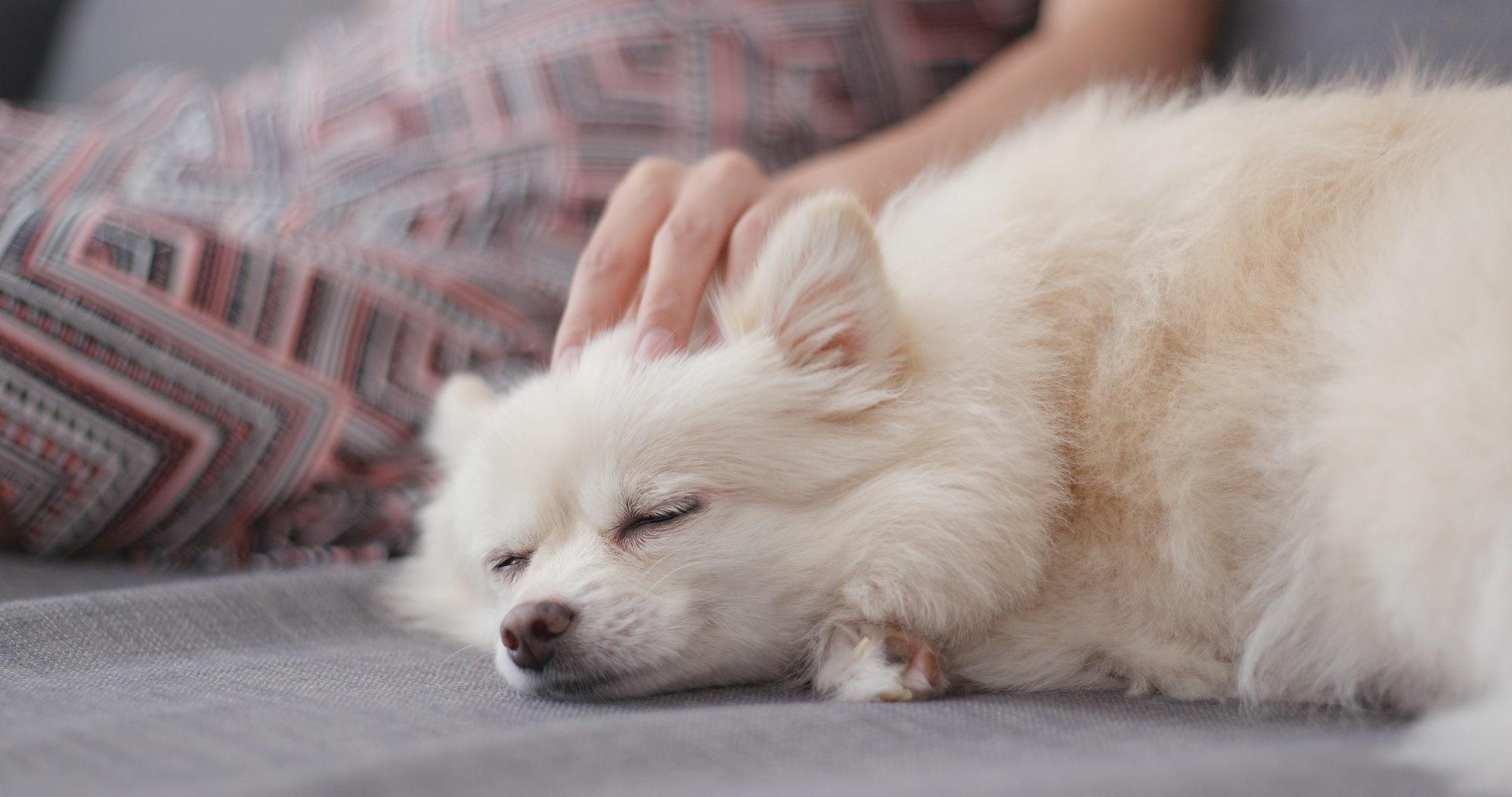 La práctica Tellington Ttouch es una de las técnicas más satisfactorias para los perros. Foto: Shutterstock.