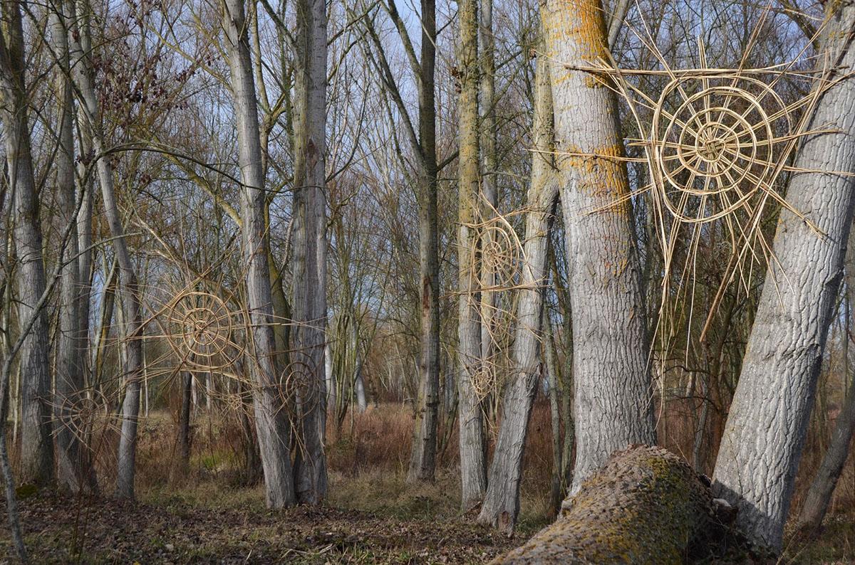 Carlos Fontales: El bosque de las arañas