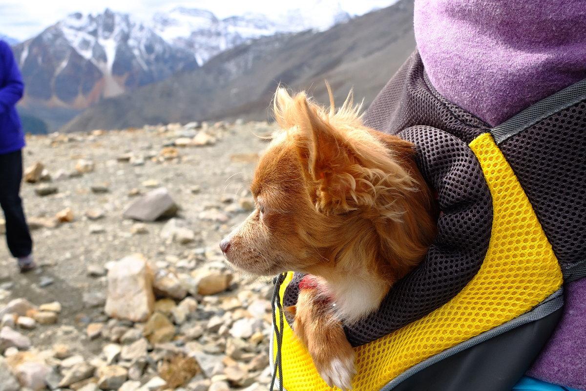 Desde su mochila también disfruta cuando se cansa.