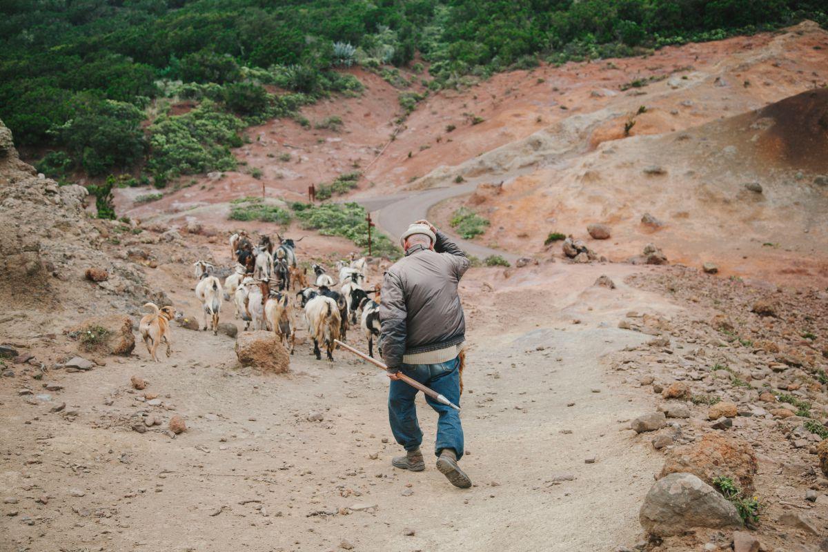 Un pastor de cabras por el parque rural de Teno, Tenerife.