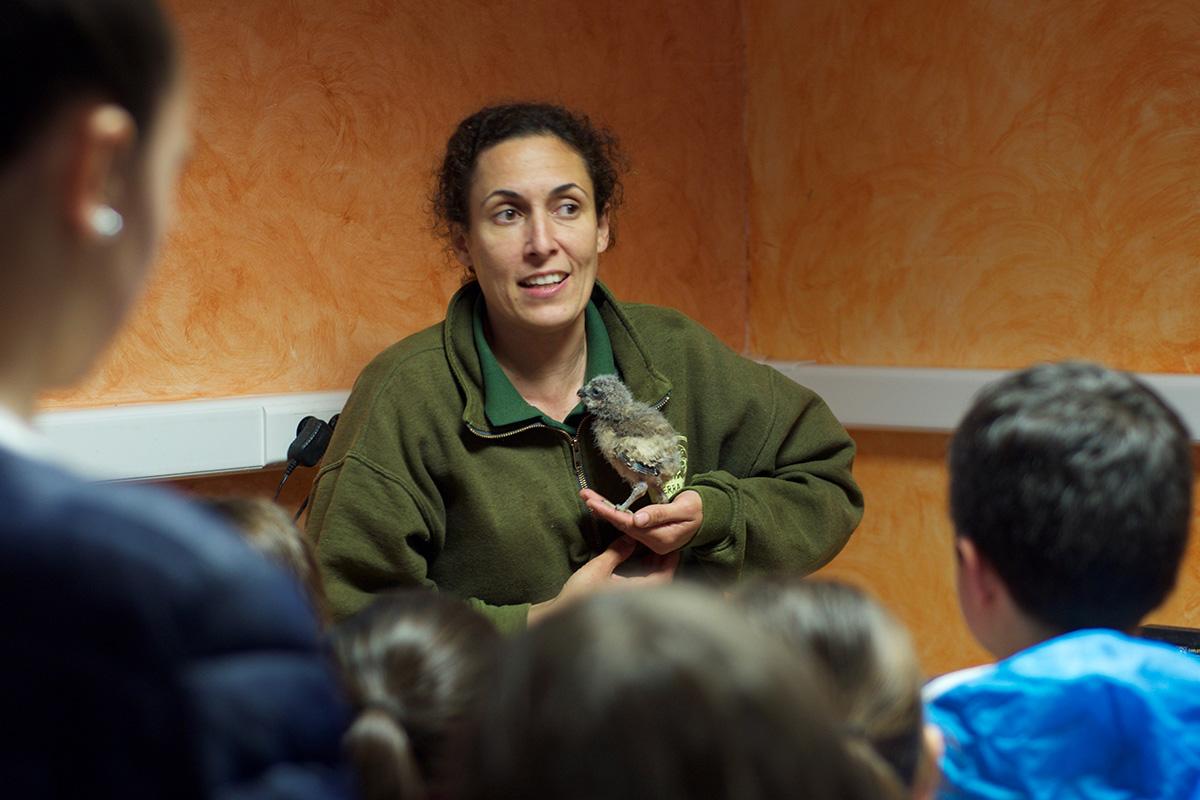 La presentación de los polluelos también enamora a los niños.
