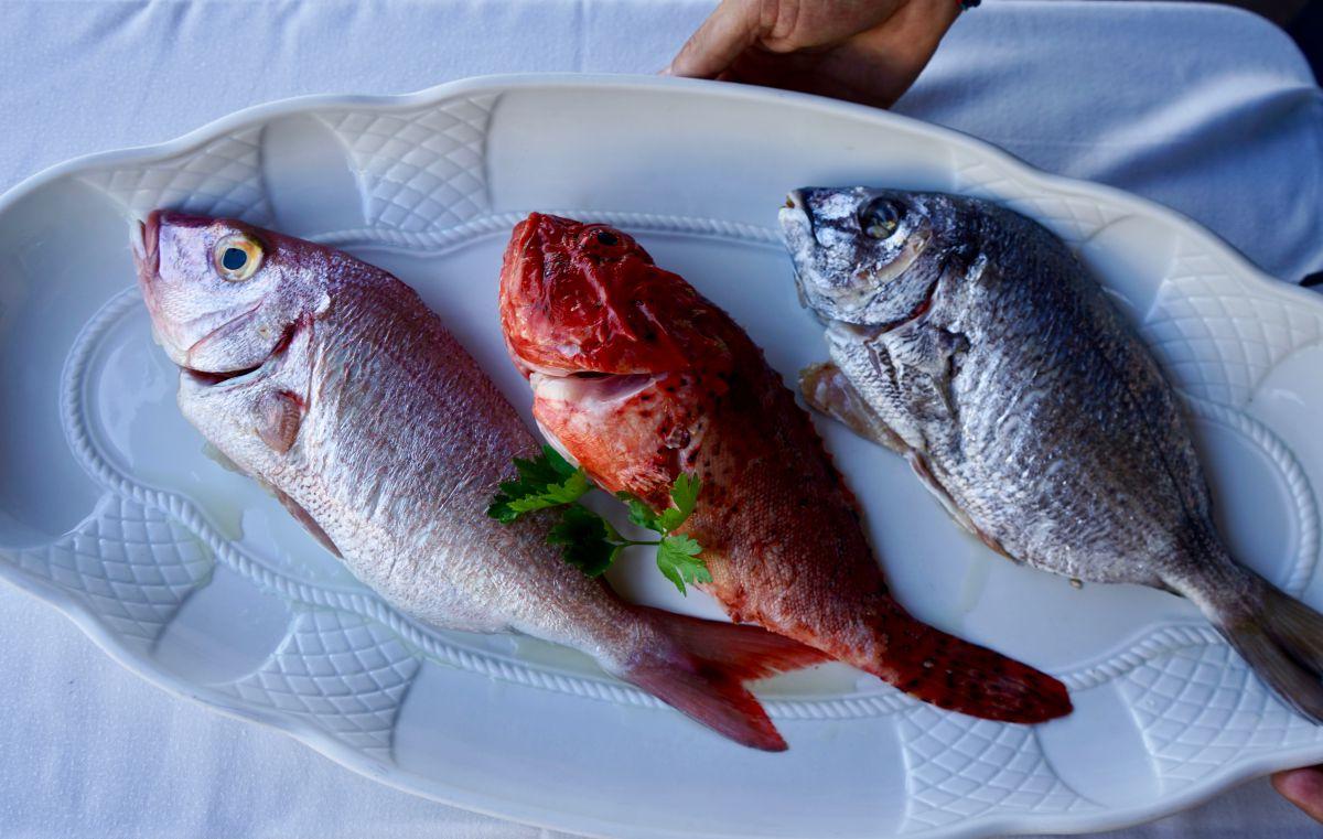 Pescados del restaurante Sport, en Luarca, Asturias.