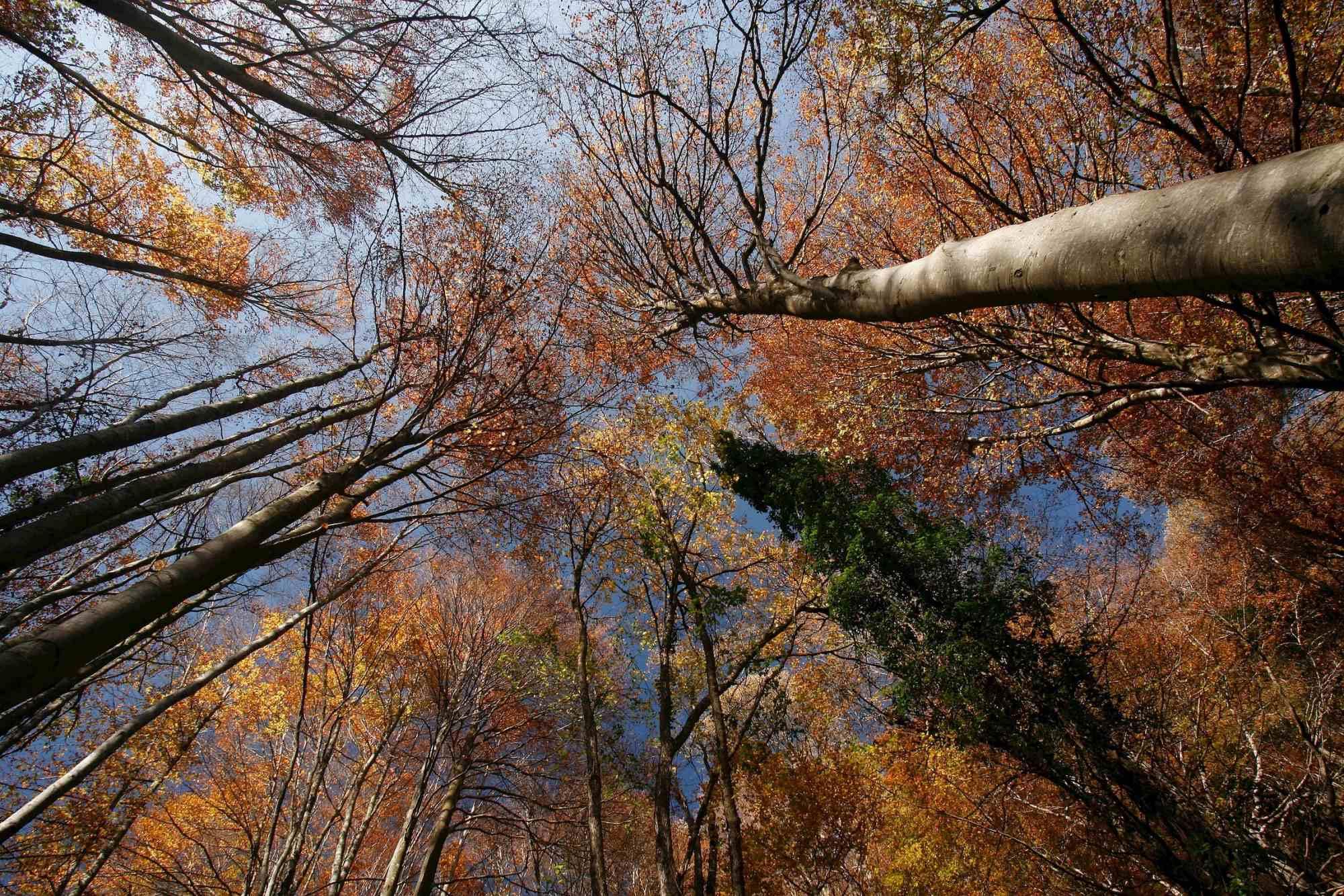 Los árboles te acompañan cuando alzas la vista al cielo. Foto: Agestock.