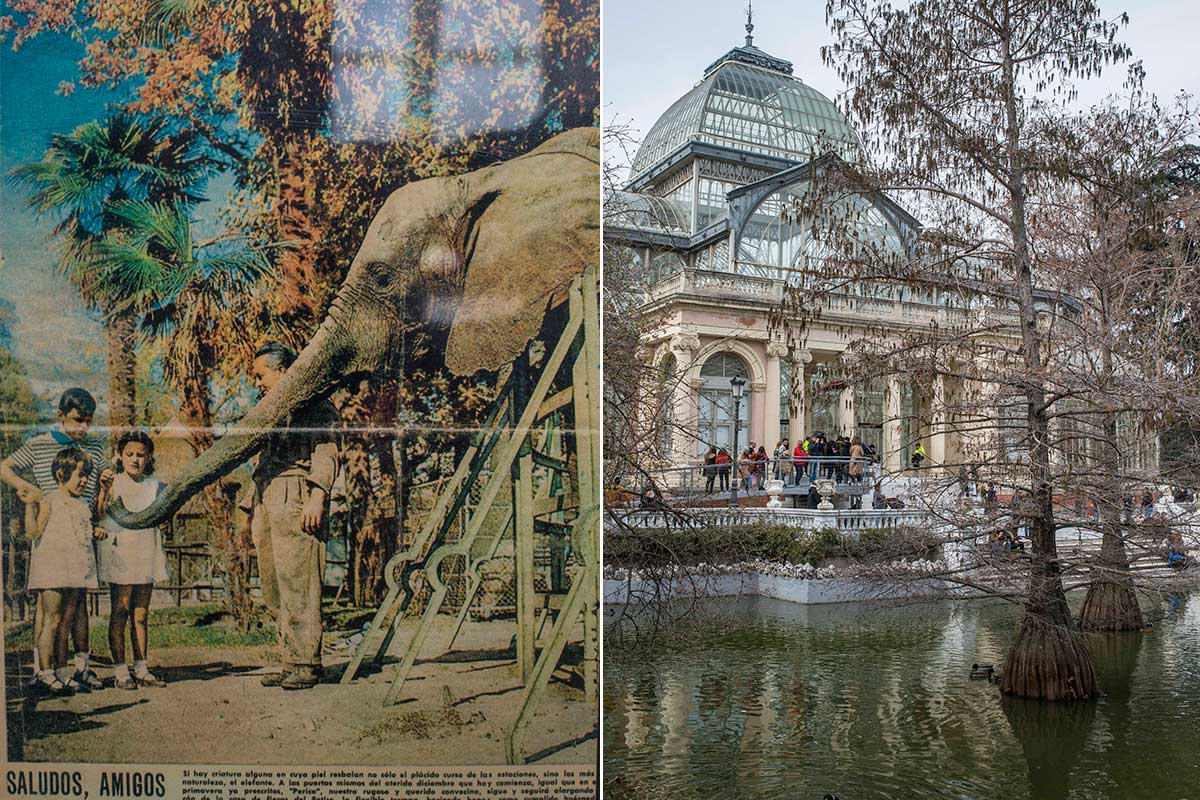 La elefanta Pizarro, el animal más famoso del parque; al lado, el Palacio de Cristal, compitiendo en fama.