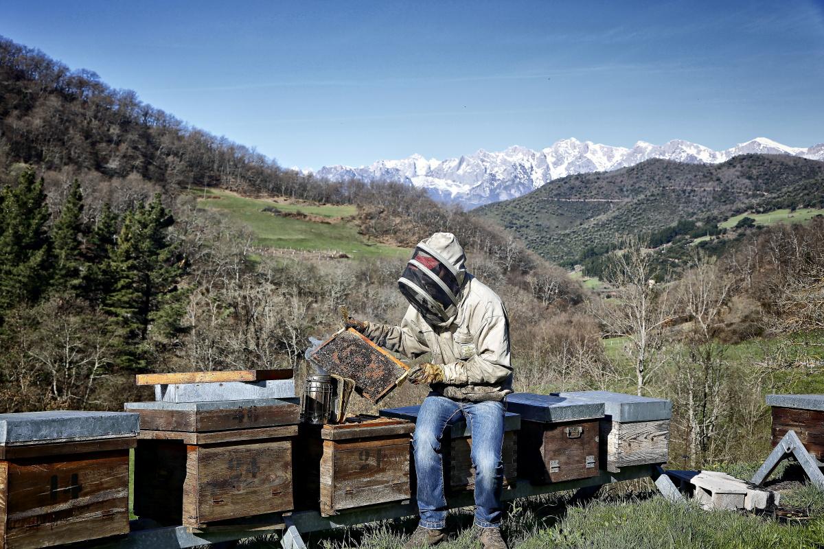 Rubén Varona cuenta con unas 400 colmenas en sus fincas de Colmenares de Vendejo.