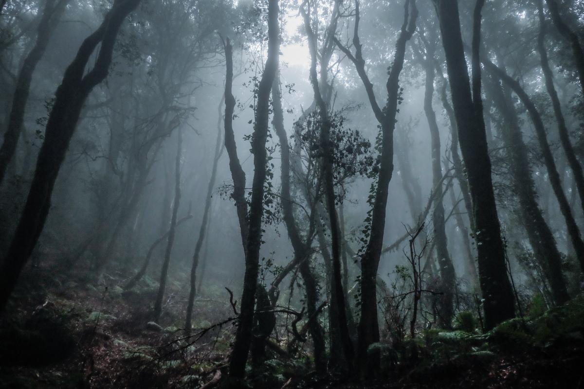 La Gomera: Bosque con niebla del Parque Nacional de Garajonay. Foto: Hugo Palotto