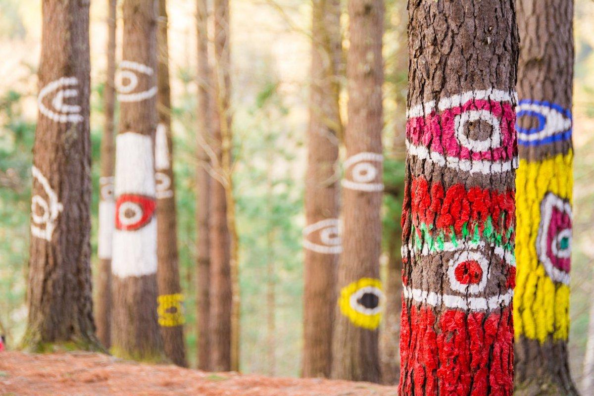 El Bosque de Oma, en el Parque de Urdaibai, está conformado con obras de Agustín Ibarrola. Foto: shutterstock.