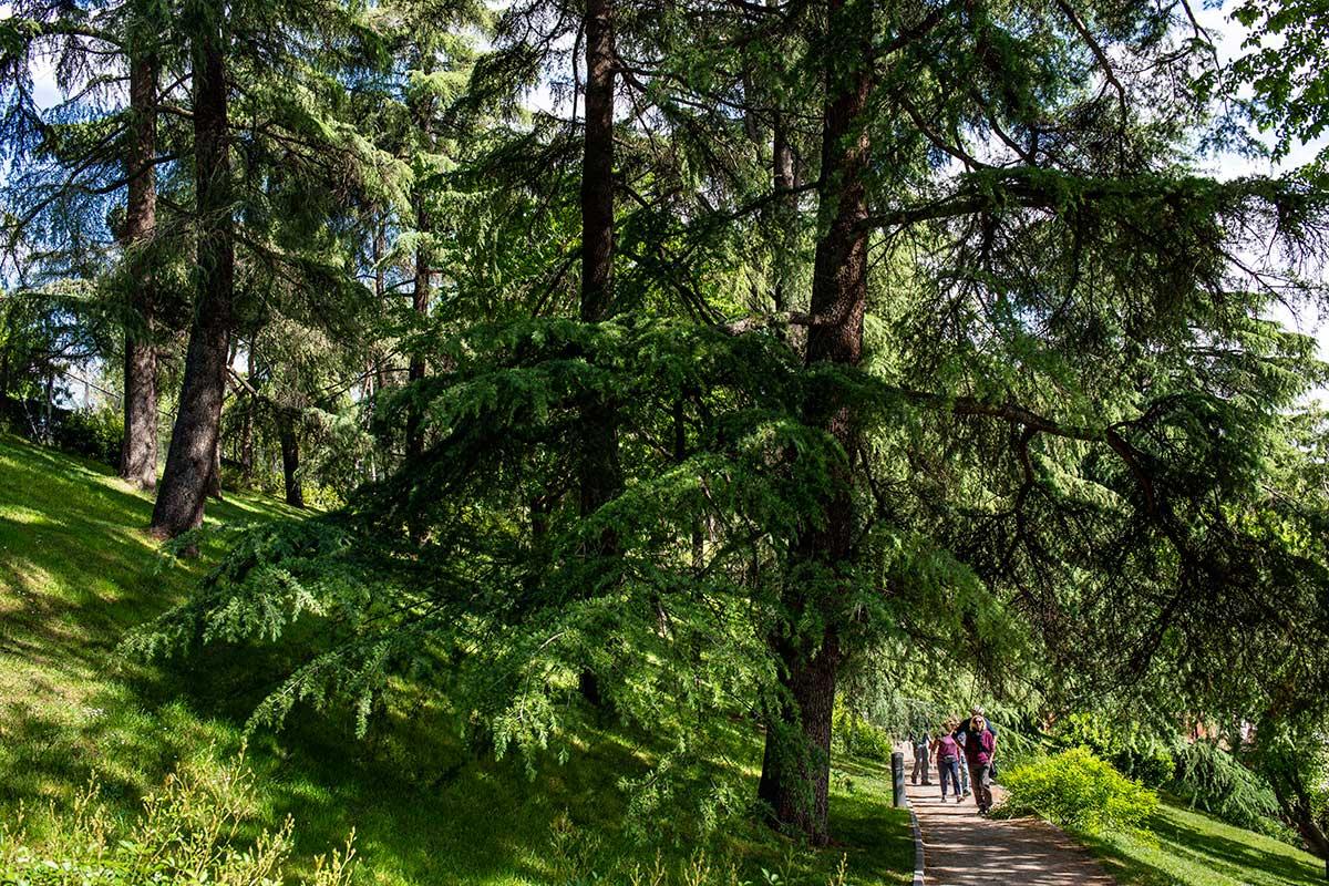 Los visitantes se adentran por el Parque del Oeste en dirección a La Rosaleda (Madrid).