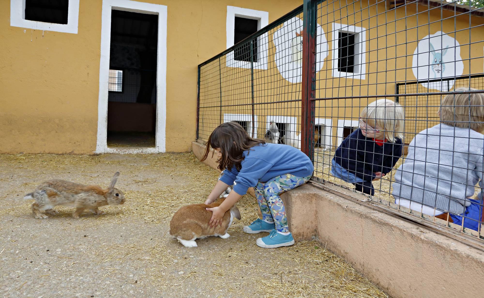 Los niños cogen con delicadeza a los pequeños conejos.