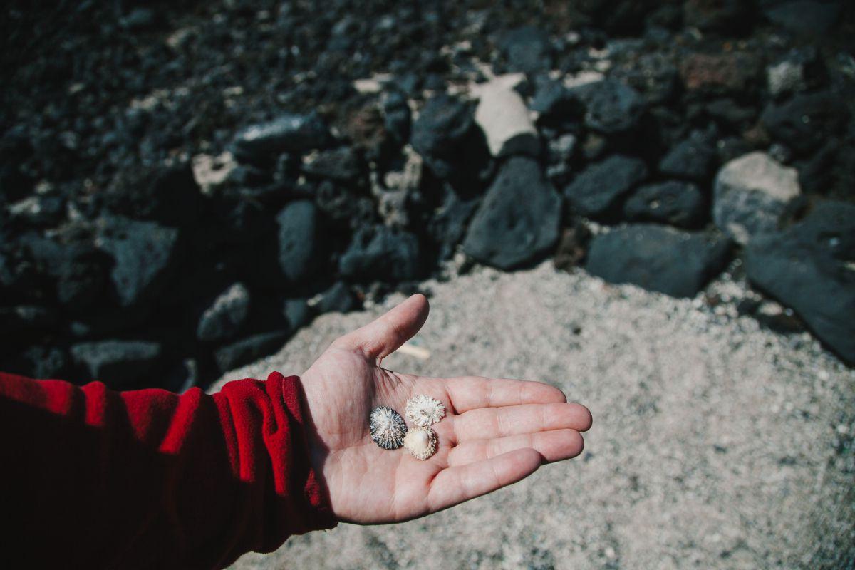 Restos de conchas que consumían los pastores.