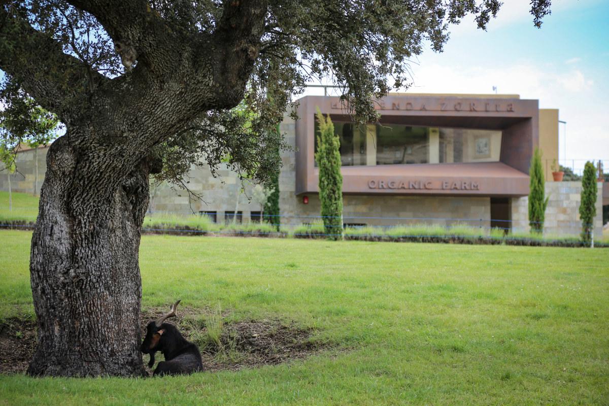 A diez minutos del hotel se encuentra 'Hacienda Zorita Organic Farm', donde se centra la producción de sus galardonados vinos, aceites, jamones...