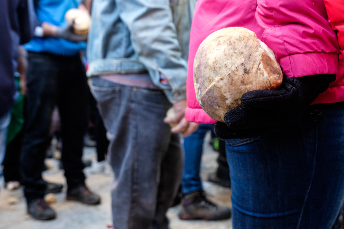Miles y miles de kilos de nabos son usados durante las fiestas en el pueblo cacereño.