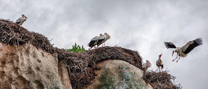 Monumento Natural los Barruecos / Cedida por: Ayuntamiento de Malpartida de Cáceres. Autor: Gabino Cisneros.