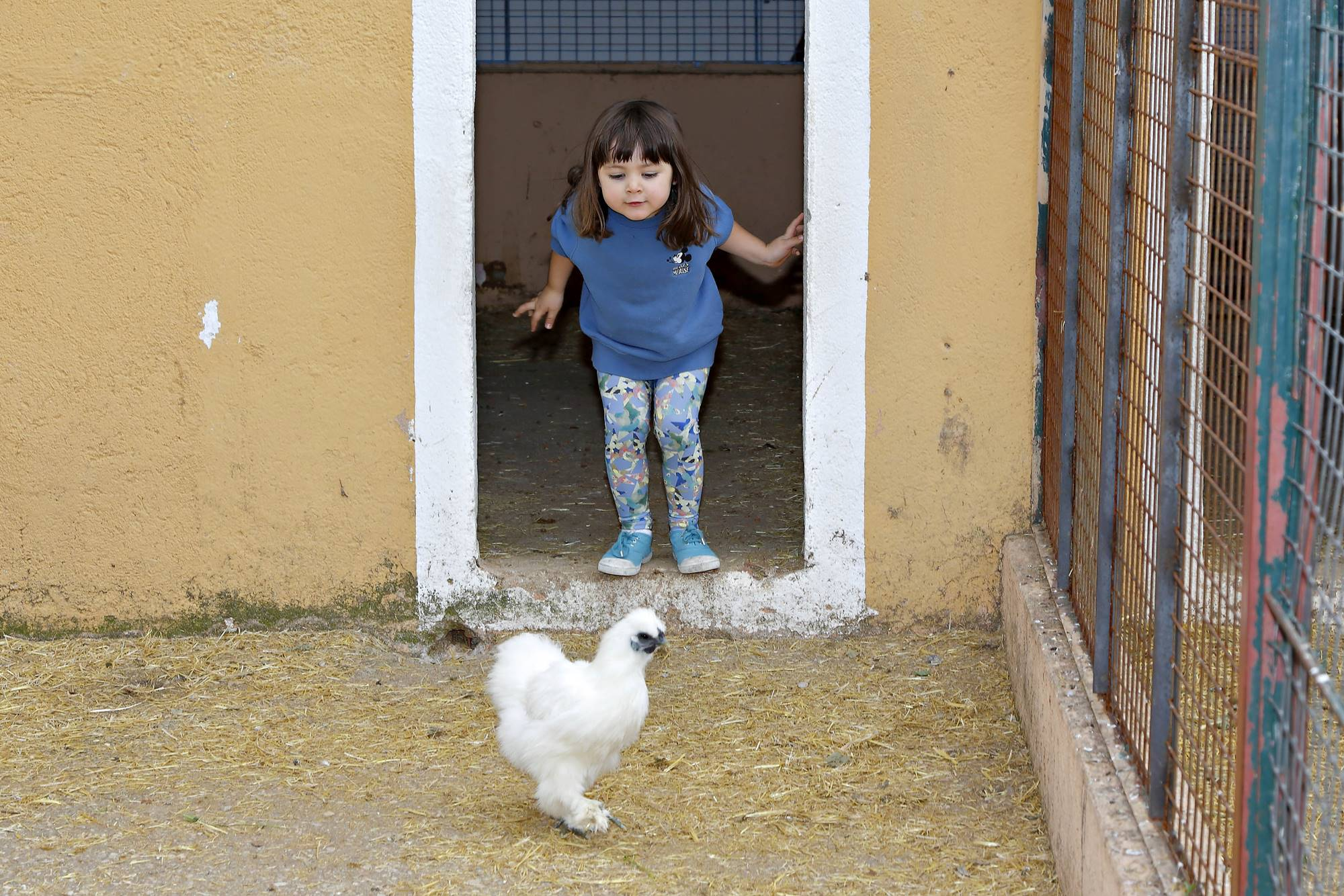 Niños de unos tres años interactúan con las diferentes especies de la granja.