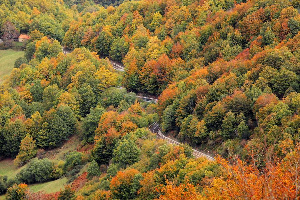 Árboles ancestrales en el valle del Liébana. Foto: Shutterstock