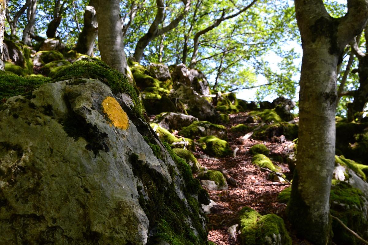 Un bosque verde y mágico nos arropa durante toda la subida.