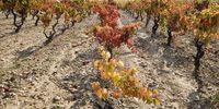 800.000 kilos de uva anuales