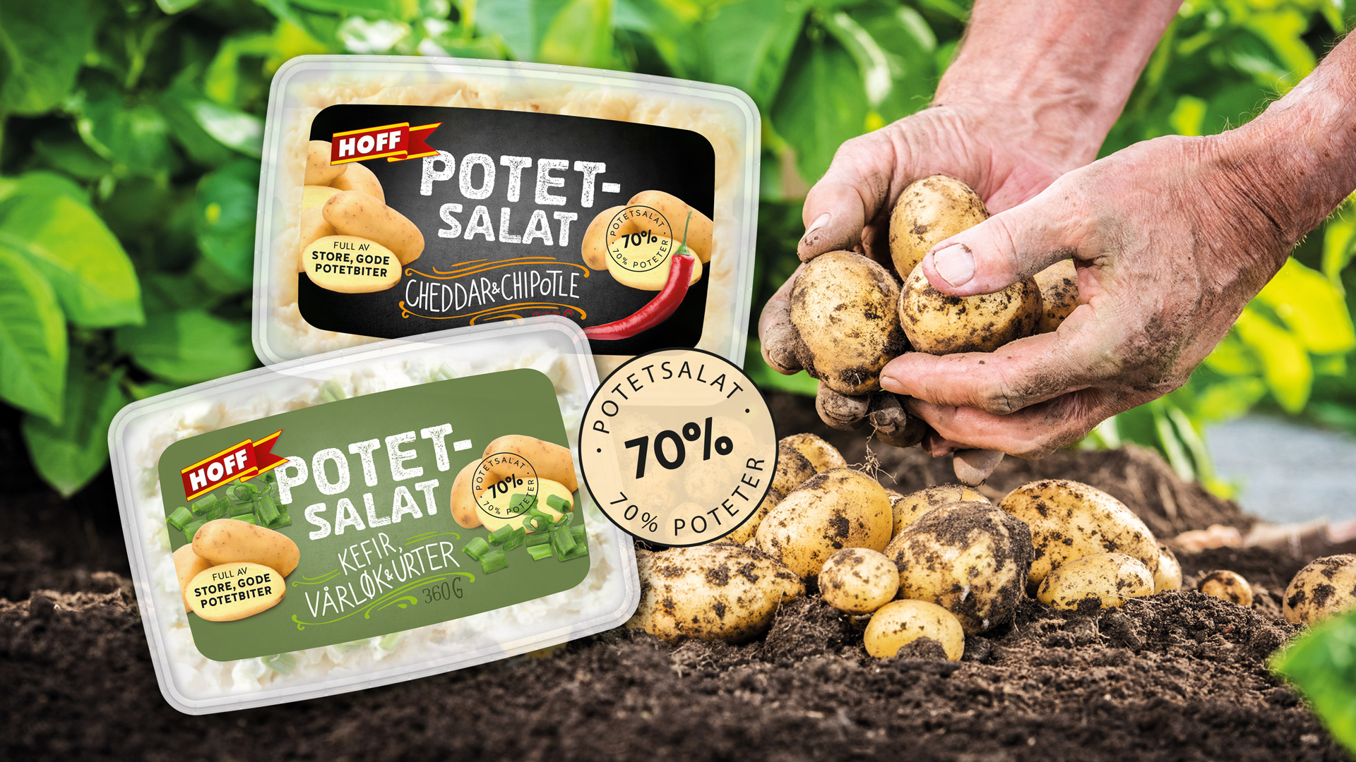 Hoff poteter