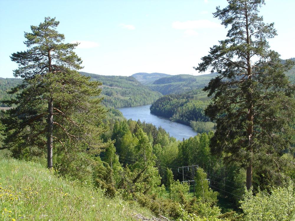 Mer än 16,4 miljoner hektar skogsmark nu PEFC-certifierade