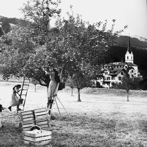 Apfellese in Cazis