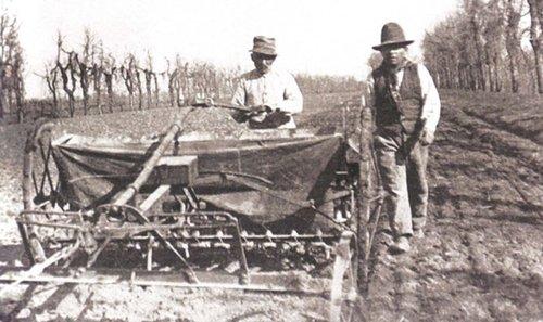 Plantar e tractar cannabis 1942