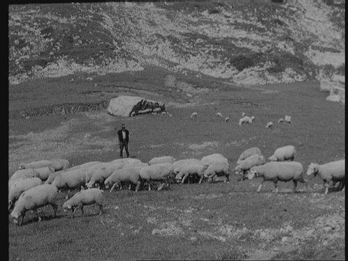 Schafe in der Bündner Herrschaft