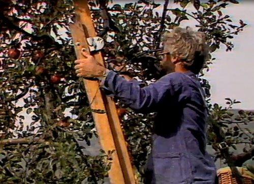 La cultira da puma en Tumleastga