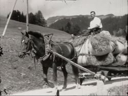Bergheuen am Schamserberg