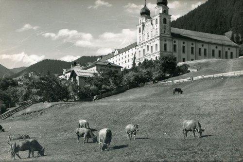 Mustér e sias vaccas