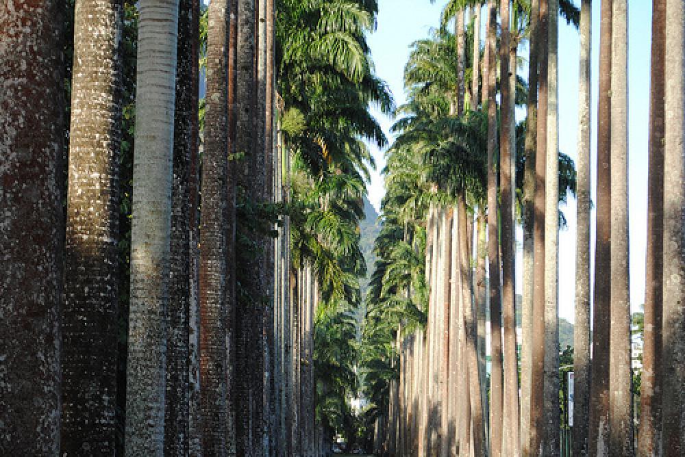 Botanische tuin (Jardim Botânico)