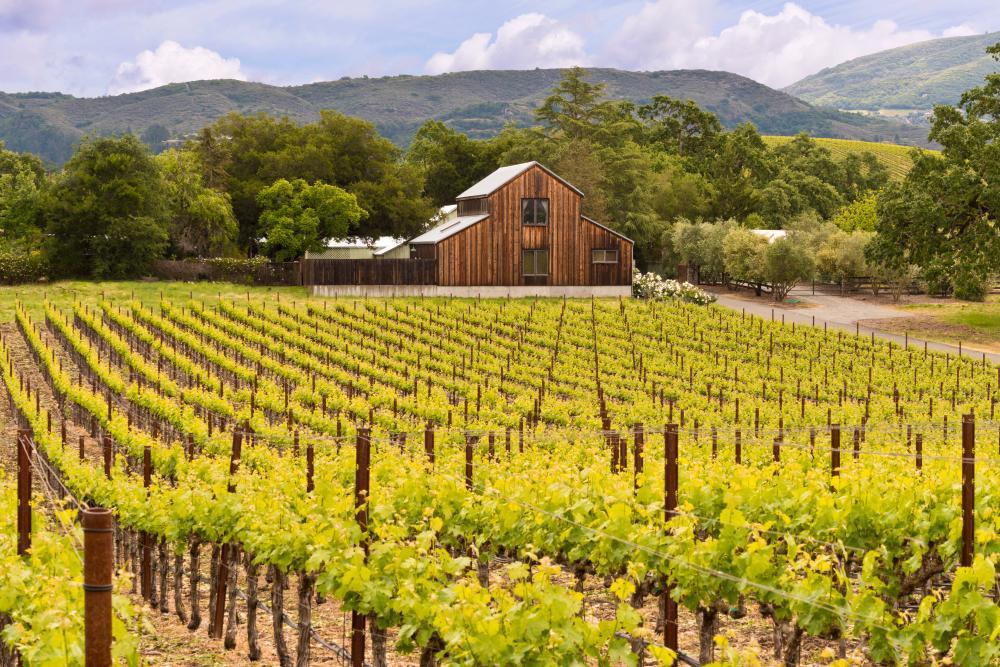 Wijnproeven in Napa en Sonoma