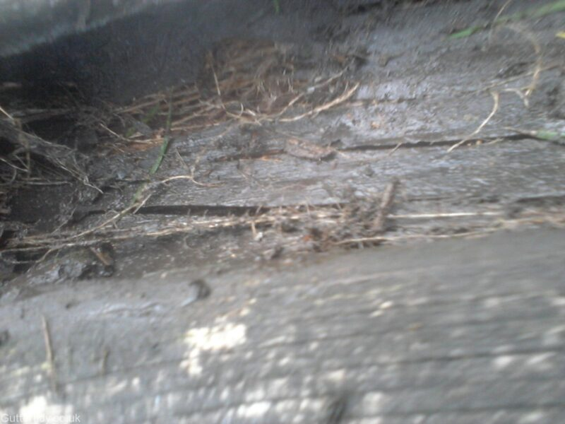 inside wooden gutter after grass and roots have been manually removed.