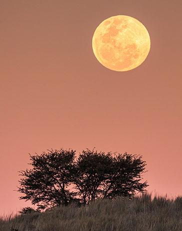 Besonders großer und heller Mond mit Landschaft