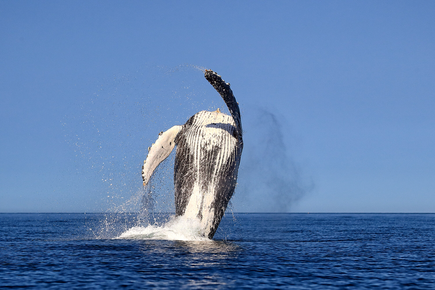 Whale photography lessons