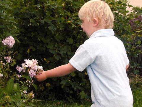 plocka (blommor)