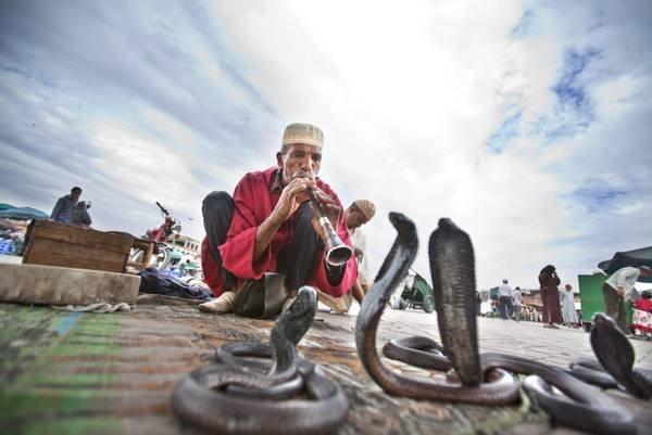 Günstig nach Marokko: Schlangenbeschwörer