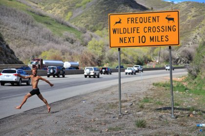 Frequent wildlife crossing...