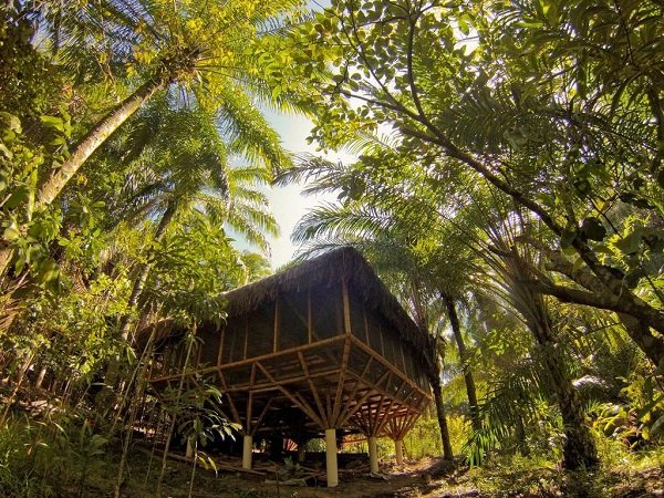 Universo Pol Bamboo
