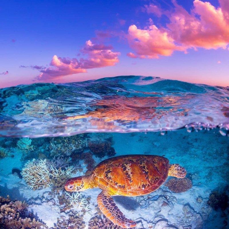 posti più belli del mondo barriera corallina