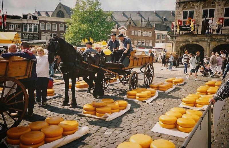 Gouda Markt is a paradise for cheese lovers