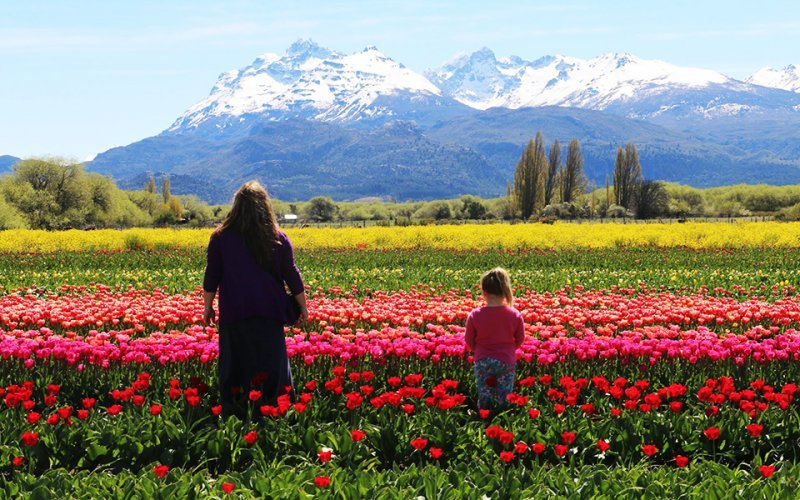 If you're visiting Patagonia you have to see its tulipans fields