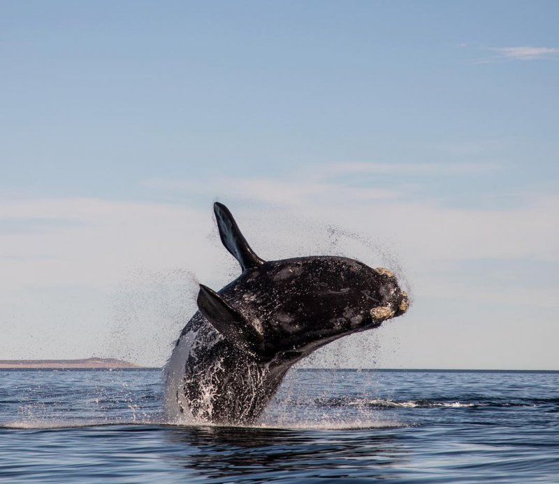 In patagonia you can do whales sightseeing!