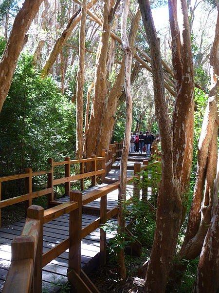 Bariloche - Bosque de los Arrayanes