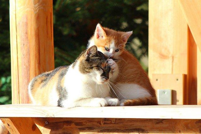 10 ihastuttavaa kissakahvilaa maailmalla